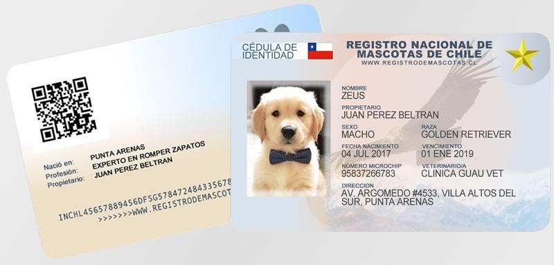 Carnet Tamano Real Para Mascotas Pvc